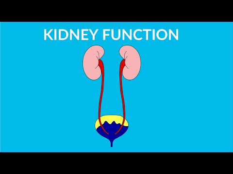 Kidney Functions in human body - video for kids