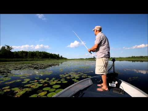 Tips for Fishing Topwater Frogs for Largemouth Bass