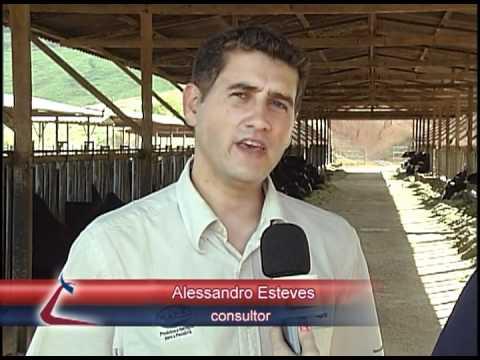 MATÉRIAS CRV LAGOA (Especial Leite MG) - Fazenda Vista Alegre