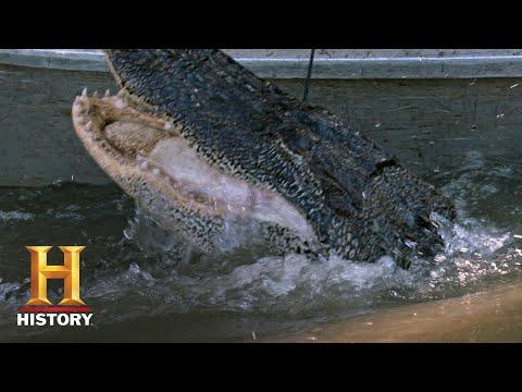 Swamp People: Troy and Ashley's Gator Hunt (Season 11)   History