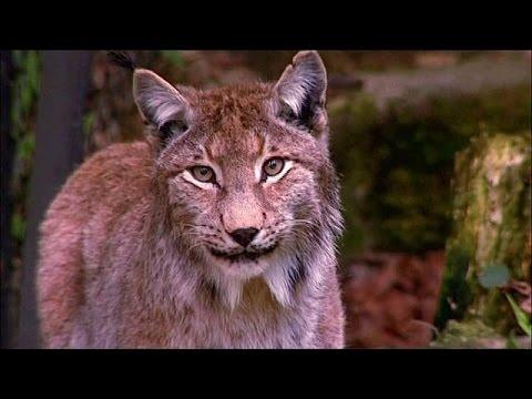 Για «μαζική εξαφάνιση» της άγριας ζωής προειδοποιεί το WWF – world