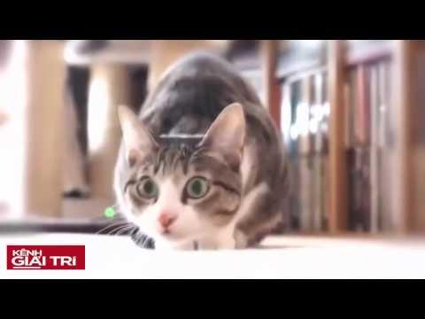 Mèo méo meo :)