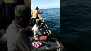Download Video Mancing ikan kakap di kota langsa MP3 3GP MP4