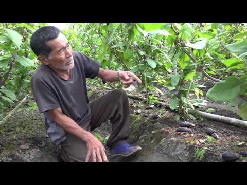 高知の有機栽培ナス