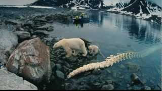 Nonton To The Arctic (3D) ~ Documentary Trailer Film Subtitle Indonesia Streaming Movie Download