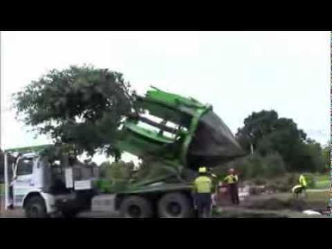 La manera más increíble de trasplantar un árbol