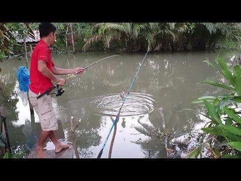 Thử câu cá sông nhỏ trước cửa nhà. điểm câu giải quyết cơn ghiền | Săn bắt SÓC TRĂNG | - Thời lượng: 25 phút.