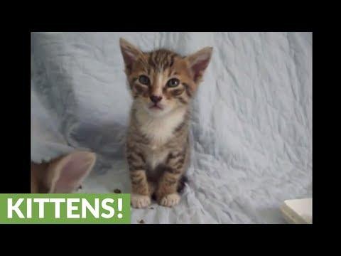 il-gattino-che-cerca-di-rimanere-sveglio