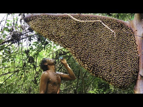 Primitive Technology: Amazing Find Giant HoneyBee For Food In The Mountain Forest
