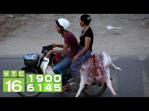 Hưng Yên lơ là giữa tâm dịch tả lợn Châu Phi I VTC16 - Thời lượng: 4 phút, 31 giây.