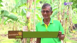 แปลงใหญ่กล้วยหอมทอง ต.ถ้ำรงค์ อ.บ้านลาด จ.เพชรบุรี