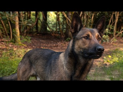 Max (2015) (TV Spot 4)