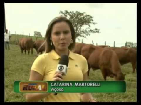 O gado senepol promete ser a grande sensação da Expoagro desse ano. O animal é ideal para o abate