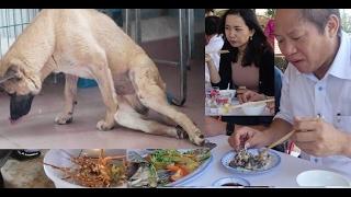 """Hải sản Kỳ Anh không ai kiếm nghiệm . """"Dân địa phương đã thử cho chó và gà vịt cho lợn ăn đều chết cả, đặc biệt nhất là chó, ăn xong là 2 chân một vài ngày l..."""
