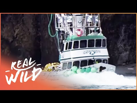 Risking it all: Alaska and the English Channel [Extreme Fishing Documentary] | Real Wild