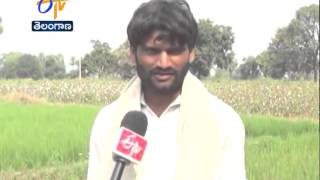 dry crop taking the lives of farmers in telangana