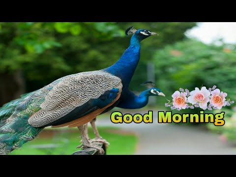 Romantic quotes - Good Morning video  Beautiful whatsApp status, Wishes/Greetings/quotes/messages/Gif/SMS video
