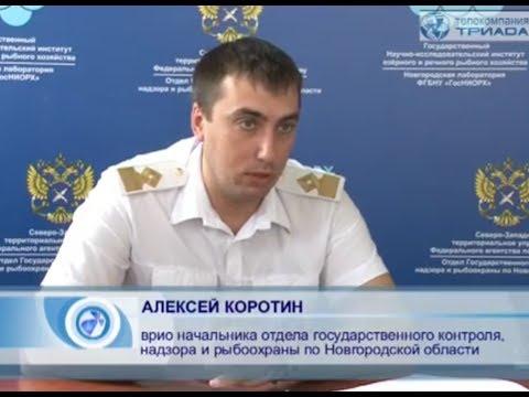 В Новгородской области рыбалку ограничили суточными нормами