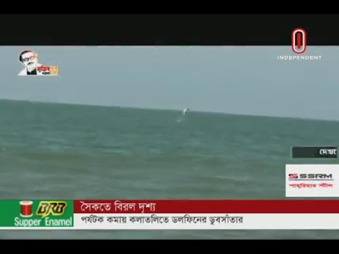 Kolatoli sea beach witnesses surge in number of dolphins (28-03-2020) Courtesy: Independent TV