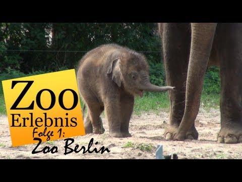 Berlin: Zoo Berlin - Zoo Erlebnis #1