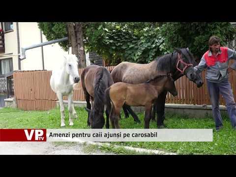 Amenzi pentru caii ajunși pe carosabil
