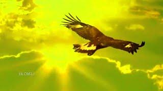 Video Leo Rojas - El Condor Pasa MP3, 3GP, MP4, WEBM, AVI, FLV September 2018