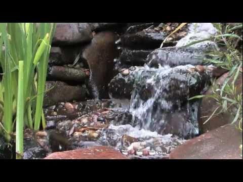 Download water garden pond design xxx mp4 3gp sex videos for Garden pond design software free download