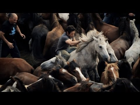 caballos salvajes - Documental sobre la Rapa das Bestas de Sabucedo, Galicia With English subtitles: http://youtu.be/gVsDMXl_zWk.