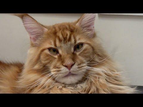 Кот обращается к ЧИТЕРАМ !!!
