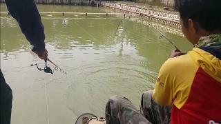 Download Video Tips Mancing Ikan Mas Lengkap Oleh Sang Pemancing Juara Edy Sunaryo MP3 3GP MP4