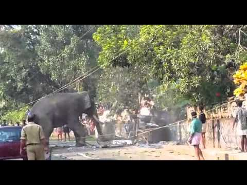 Video Elephant Attack Narikkuni Punnassery download in MP3, 3GP, MP4, WEBM, AVI, FLV January 2017