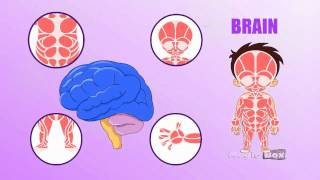 BRAIN - Learn about Human Body Parts For Kids (Tamil)