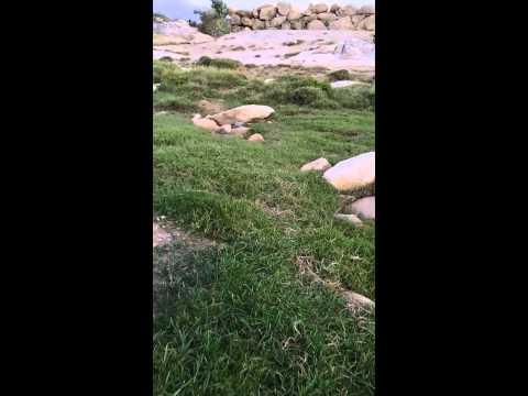 جمال الطبيعة في وادي بَقْرة بمركز ثلوث المنظر بته