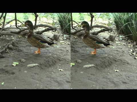 laura paradise (видео)