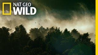 Trailer Wild New Zealand - Nat Geo WILD