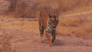 Panna India  City new picture : Journeys in India: Panna National Park
