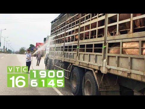 Họp khẩn ngăn dịch tả lợn Châu Phi vào Nam | VTC16 - Thời lượng: 2 phút, 15 giây.