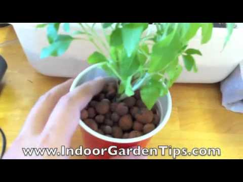 how to replant living herbs