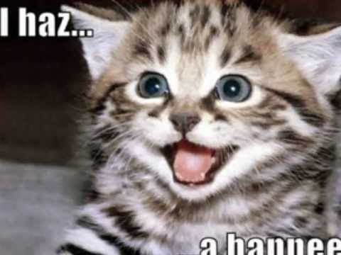 Video of LOLCats - Funny cats pictures