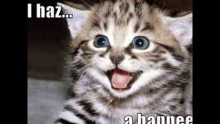 LOLCats - Funny cats pictures YouTube video