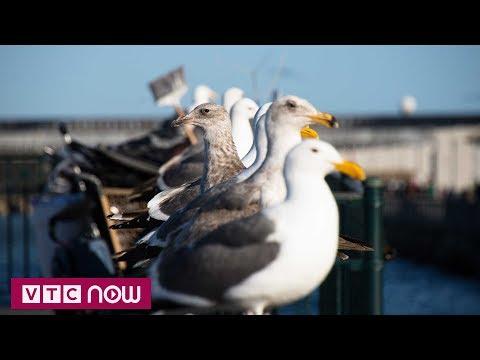 Vừa ăn vừa phun súng nước đuổi chim | VTC1 - Thời lượng: 48 giây.