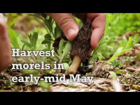 Savor Door County - Morel and Asparagus Pasta