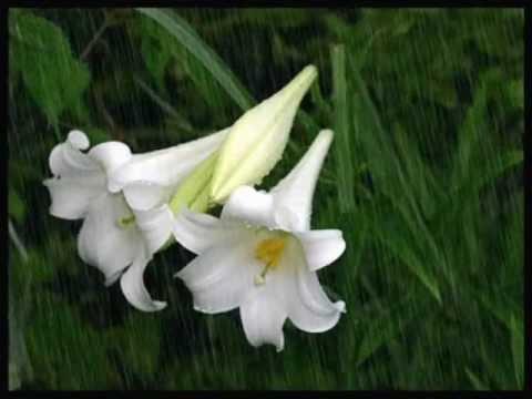 Bebu Silvetti - Spring Rain (Lluvia de Primavera)
