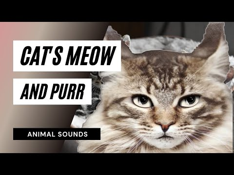 The Animal Sounds: Cat Meow And Purr - Sound Effect - Animation