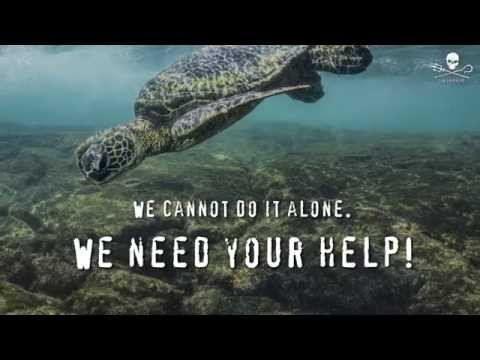 Operation Jairo 2015 Sea Turtle Defense Campaign