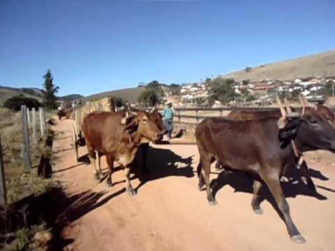 Desfile de carros de boi em Natércia - MG