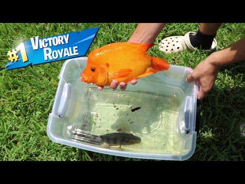 FISH BATTLE ROYALE In Plastic tub - Thời lượng: 15 phút.