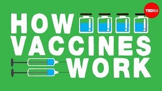 How Do Vaccines Work? - Kelwalin Dhanasarnsombut