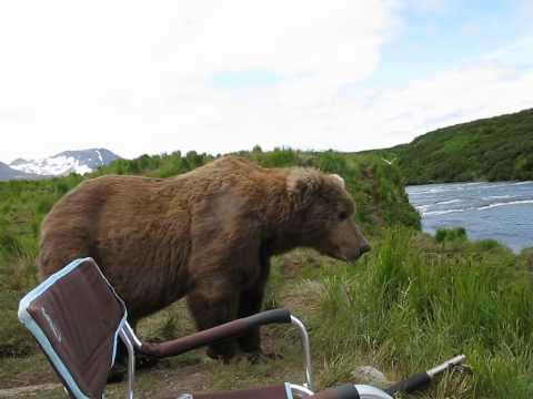 Bear sits next to a guy in Canada (9,0)