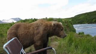 A horgász és a medve